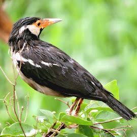 BIRDIE by SANGEETA MENA  - Animals Birds