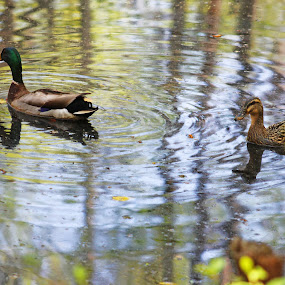 by Elizabeth Kuhn Nelson - Novices Only Wildlife