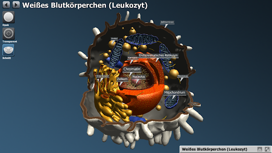 bodyxq cell library Screenshot