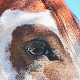 Pippi's by Rose Smith - Animals Horses ( beautiful, a, has, pippi, eye )