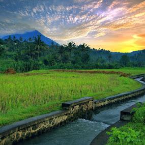 Puncak Bisbis, Karangasem, Bali by Alit  Apriyana - Landscapes Mountains & Hills