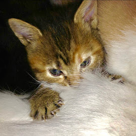 by Eirin Hansen - Animals - Cats Kittens
