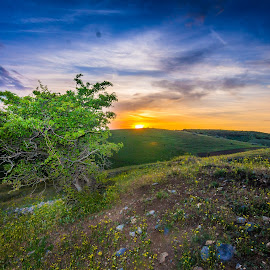 singularity by Paul Coev - Landscapes Prairies, Meadows & Fields ( colour, single, tree, grass, sunset, alone, spring, prairie, gree )