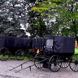 Buggies for Sale by Christine B. - Transportation Other ( amish, buggy, black, sale )