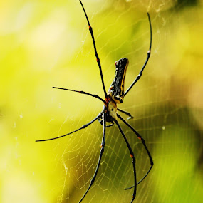 My home by Swapnil Khare - Animals Insects & Spiders