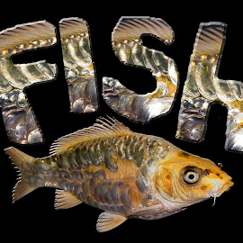 FISH  by Janna Morrison - Typography Words ( fish )