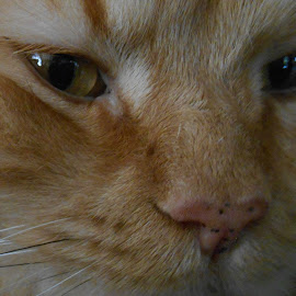 Pepi's Spotted Nose by Liz Pascal - Animals - Cats Playing