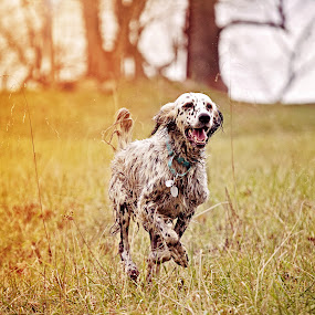 by Susan England - Animals - Dogs Running