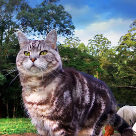 Puss on Guard by Cheryl Hesketh - Animals - Cats Portraits ( farm, cat, horses, australia, country )