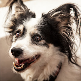 Dog by Maricha Knight van Heerden - Animals - Dogs Portraits ( black and white, street, cute, dog )