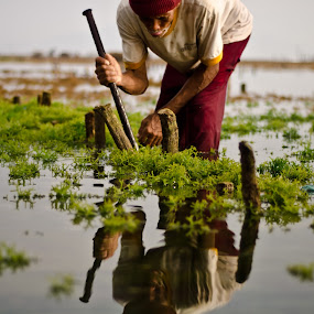 Seaweed Farmer by Wisnu Taranninggrat - News & Events World Events ( bali, farmer, seaweed, sea, morning )