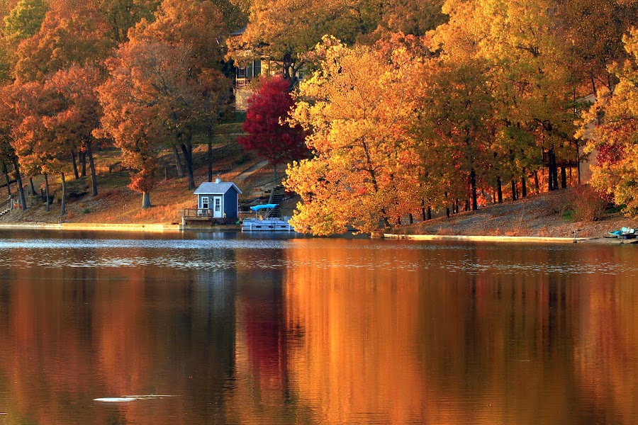 FALL REFLECTIONS by Dana Johnson - Landscapes Waterscapes ( autumn, waterscape, fall, trees, reflections, lake, landscape )