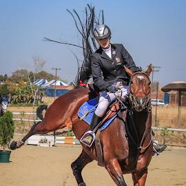 Stubborn by Dirk Luus - Animals Horses ( equine, horse, stubborn, showjumping, animal )