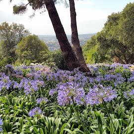 Sintra's Forbidden Gardens by Pedro Relvas e Ana Carreira - Nature Up Close Gardens & Produce ( park, sintra, gardens, portugal, flowers, natural park, garden, flowers photo,  )