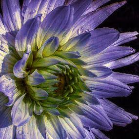 Flower by Dunja Dretvić - Nature Up Close Flowers - 2011-2013