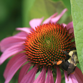bee and flower by Eric Rainbeau - Nature Up Close Other plants
