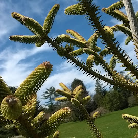 by Jennifer Peltz - Nature Up Close Trees & Bushes