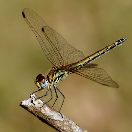 Nature's Little Angel by Celia Watkins - Animals Insects & Spiders