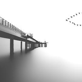 Into the white  by Elena Salvai - Digital Art Places ( black and white, waterscape, digital art, white, pier, sea, seascape, digital photography, birds )