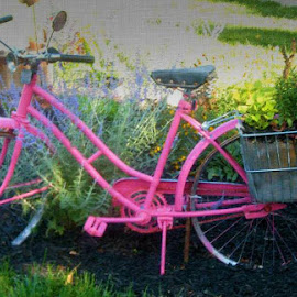 by Lucretia Bittner - Transportation Bicycles (  )