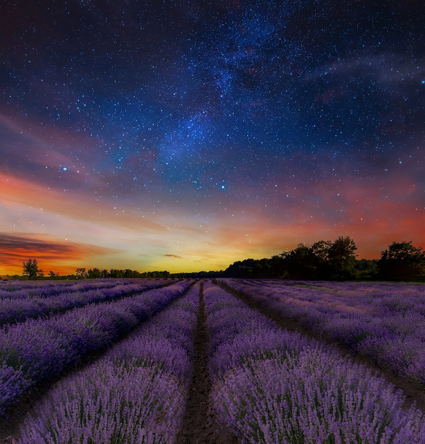 by Gigi Kent - Landscapes Prairies, Meadows & Fields