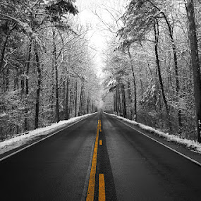 As the Road goes on by Aaron Shaver - Landscapes Forests ( winter, cold, snow, mood, trees, forest, road, light,  )