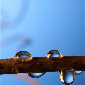 Water Drops by Jack Noble - Artistic Objects Other Objects ( water, jack nobre, macro, drops, photography )