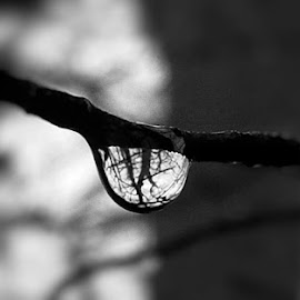 Water droplet woodland shot by Sam Kirimli - Abstract Water Drops & Splashes