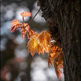 light in leaves by Jana Vondráčková - Nature Up Close Leaves & Grasses