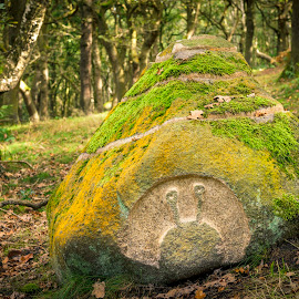 Alien Rock by Darrell Evans - Nature Up Close Rock & Stone ( plant, wood, autumnal, grass, flora, green, moss, carving, stone, forest, boulder, landscape, vegetation, leaves, woods, autumn, no people, outdoor, fall, trees, woodland )