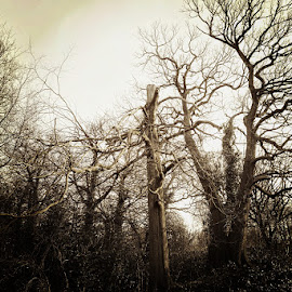 tree by Kathleen Devai - Landscapes Forests ( twisted, sky, bark, trees, branches )