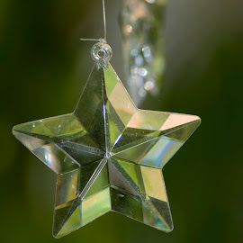 Shining Star by Joseph Merrell - Public Holidays Christmas ( celebration, green, ornament, star, shining, holiday )
