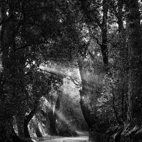 the light by Lorenzo Moggi - Black & White Landscapes
