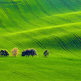 Moravian waves by Miroslav Havelka - Landscapes Prairies, Meadows & Fields ( moravian, waves, green, landscape, spring, fields )