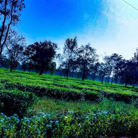 by Abhisek Bhattacharjee - Landscapes Travel