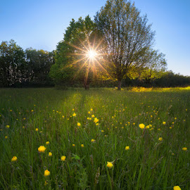 Summer is coming by Babus Patrik - Landscapes Prairies, Meadows & Fields ( clear, sky, blue, green, trees, summer, yellow, landscape, flowers, sun, photoshop )