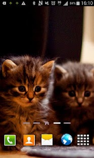 Kittens Live Wallpaper - screenshot