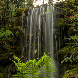 Refreshing Falls by Robert Coffey - Landscapes Waterscapes ( stream, foliage, tropical, waterfall, ferns )