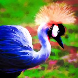 O'Keefe Crown Crane by Ron Meyers - Digital Art Animals