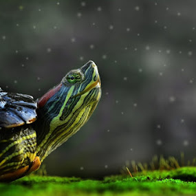 alone by Girdan Nasution - Animals Reptiles
