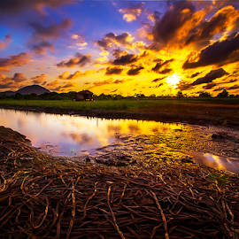 Gold time by Dany Fachry - Landscapes Sunsets & Sunrises