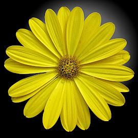 OLI osteo 05 by Michael Moore - Flowers Single Flower