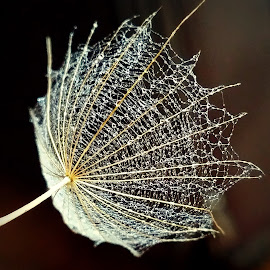 by Biljana Nikolic - Nature Up Close Other plants