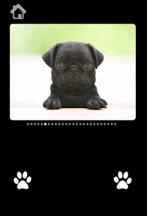 Cute Puppy Pictures For kids - screenshot