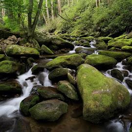 Roaring Fork by Tim Devine - Landscapes Forests ( stream, great smoky mountains national park, creek, tennessee, roaring fork motor nature trail, roaring fork, gsmnp )
