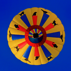 Below the Balloon by Dave Skorupski - Transportation Other ( hot air balloon, cat, dogs, yellow, balloon, fair, cats, round.circle, red, blue, hot, festival, air, dog, faire,  )