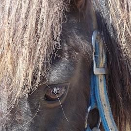 by Pal Mori - Animals Horses