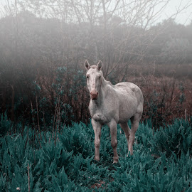 Dreaming of Horses by Edi Libedinsky - Animals Horses ( dreamy, pasture, beautiful, horse, white, quiet )