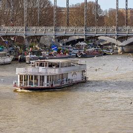 Louisiana In Paris by Robert Namer - Transportation Boats ( clouds, waterscape, boats, tourism, transportation, cityscape, birds, city, seine, paris, fleuve, sky, blue, france, bridge, river )
