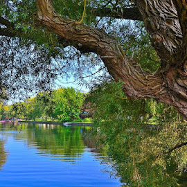 by Robin Stover - City,  Street & Park  City Parks